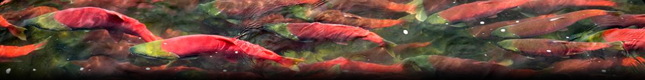 Like the Salmon who return every year, Last Frontier Designs will be there for your business year after year.